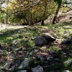 سفر به قلب تبنده گردشگری استان کرمان